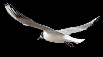 decortive bird